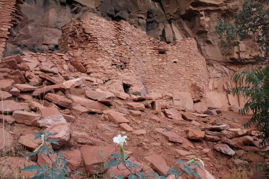 Honanki07 - Honanki Ruins, Sedona: 900 Jahre Hopi Geschichte