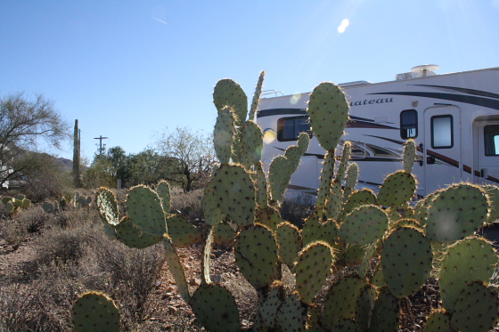 GilbertRay02 - Tucson, Arizona: Gilbert Ray Campground - riesige Saguaros im Tucson Mountain Park