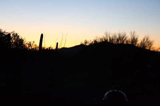 GilbertRay04 - Tucson, Arizona: Gilbert Ray Campground - riesige Saguaros im Tucson Mountain Park