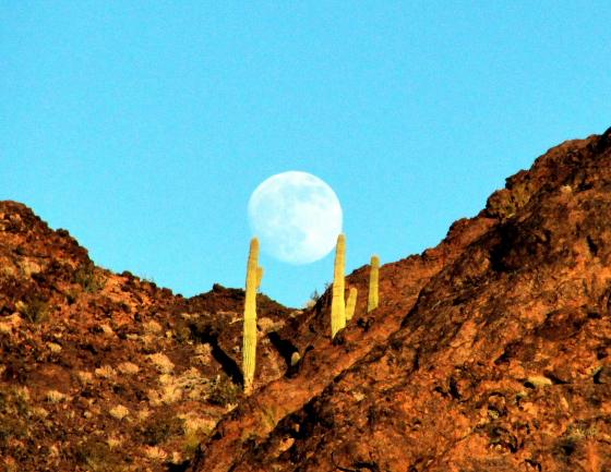 JoeLange18 - Quartzsite, Arizona: Auf Tour mit Natur-Photograph Joe Lange