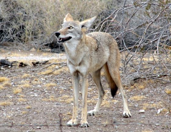JoeLange20 - Quartzsite, Arizona: Auf Tour mit Natur-Photograph Joe Lange