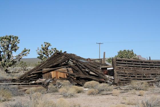 MojaveNationalPreserve02 - Mojave National Preserve, Kalifornien: Joshua Tree Wonderland