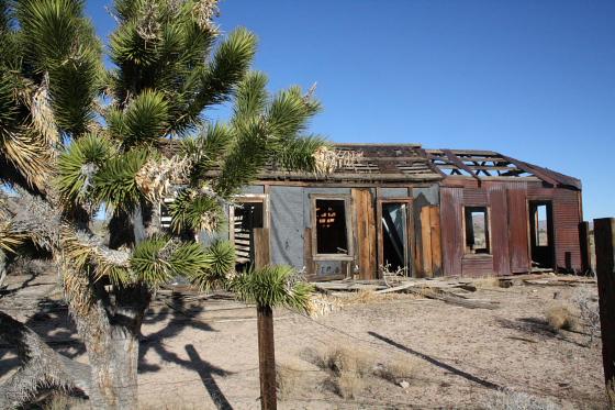 MojaveNationalPreserve03 - Mojave National Preserve, Kalifornien: Joshua Tree Wonderland