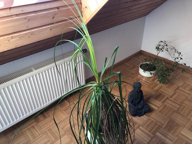 """Hippie Palme02 - Projekt """"Freiraum"""" am Hochrhein: Es wird noch grüner"""