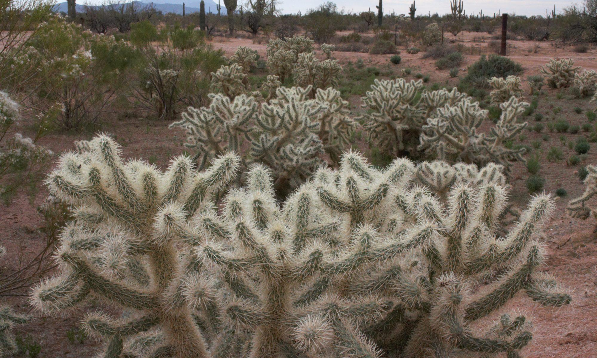 DesertGardens