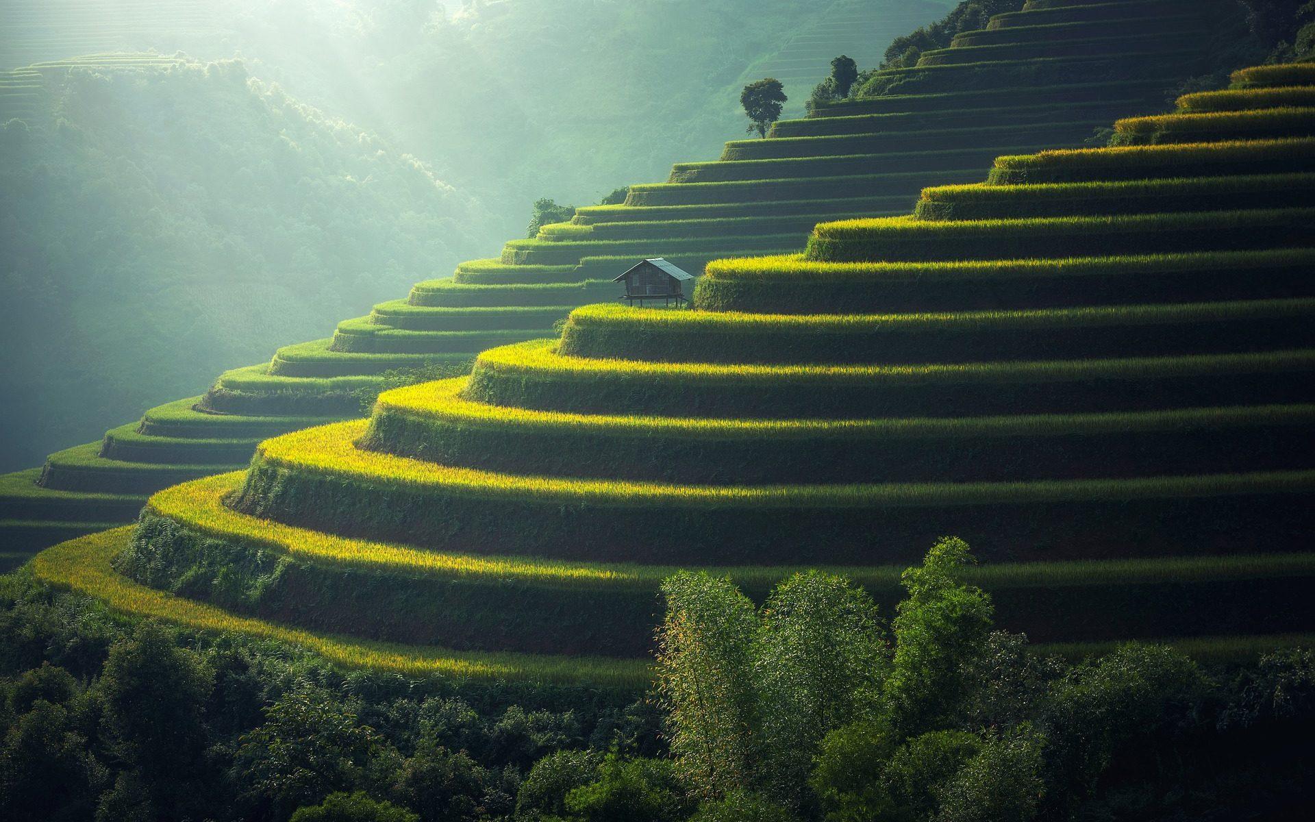 asia rice plantation 1920x1200 - Indonesien: Die Reisterrassen auf Bali