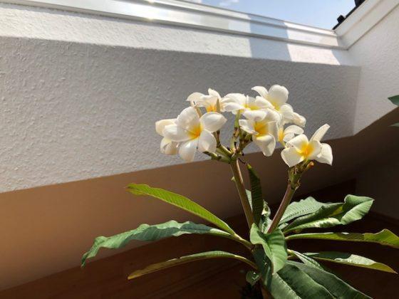 """bluetenzauber01 560x420 - Projekt """"Freiraum"""" am Hochrhein: Blütenzauber unterm Dach"""