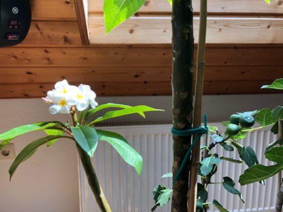 """bluetenzauber03 560x420 - Projekt """"Freiraum"""" am Hochrhein: Blütenzauber unterm Dach"""
