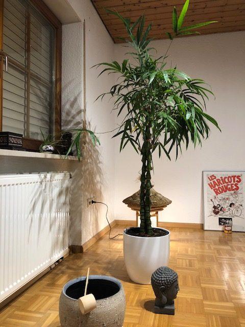 "buddha bamboo02 e1539289875398 - Projekt ""Freiraum"" am Hochrhein: Martin Egloff macht uns sprachlos"