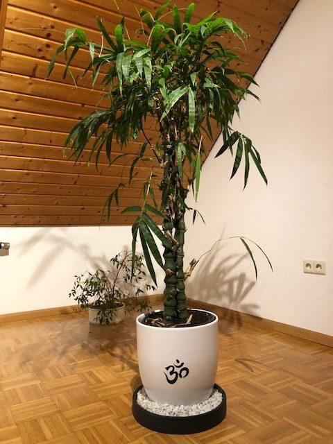 """buddha. bambus02 e1539457153906 - Projekt """"Freiraum"""" am Hochrhein: Martin Egloff, der Zauberkünstler"""