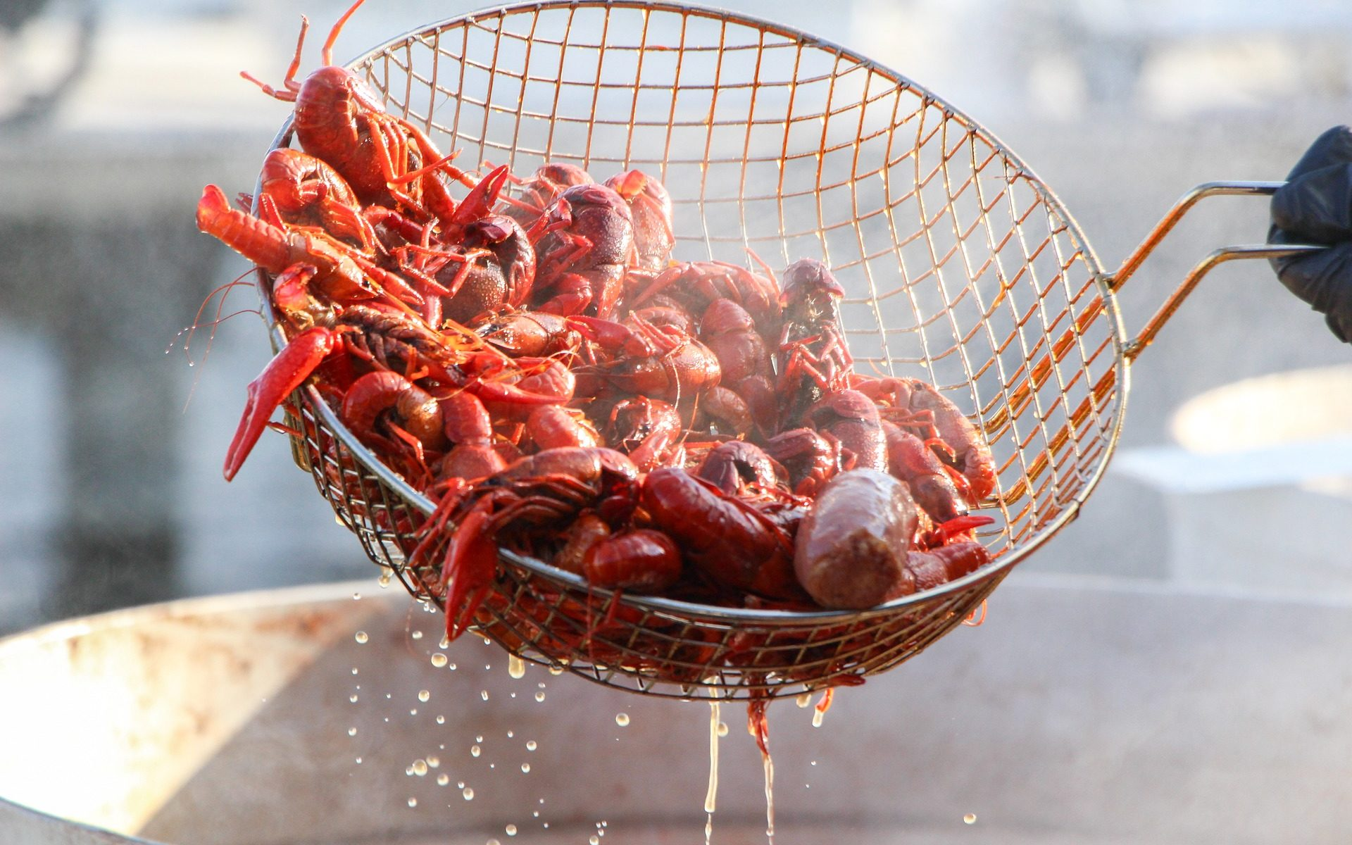 crawfish krebse 1920x1200 - Hunger: Wir wollen Cajun Crawfish (Flusskrebse)