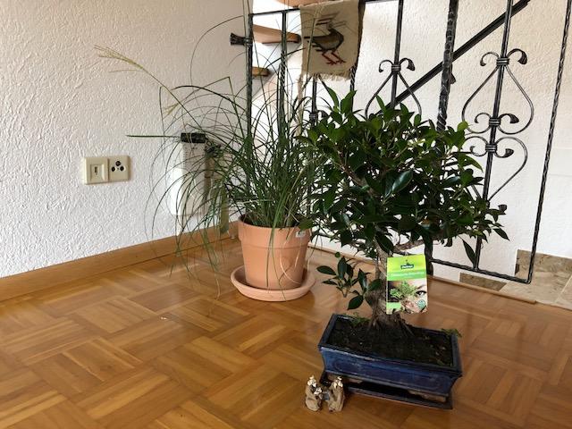 """freiraum bonsai01 - Projekt """"Freiraum"""" am Hochrhein: Jetzt wird es grün"""