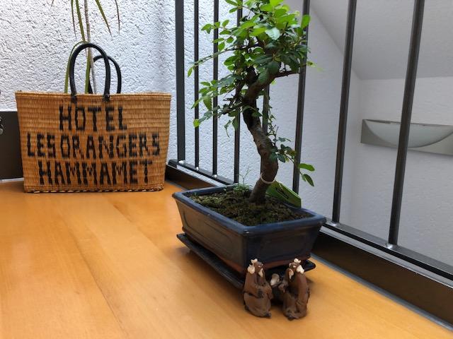 """freiraum bonsai02 - Projekt """"Freiraum"""" am Hochrhein: Jetzt wird es grün"""