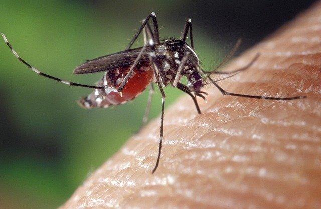 mosquito muecke.moskito - Pharmahersteller Biontech: Mainzer Firma will Malaria-Impfstoff entwickeln
