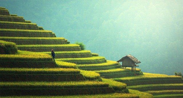 reisterrasse 1 - Indonesien: Die Reisterrassen auf Bali
